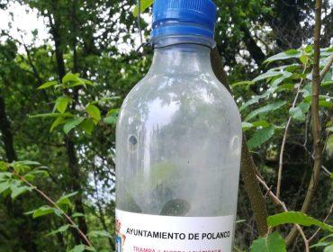 Una de las trampas para vespa velutina que se utilizan en el municipio de Polanco